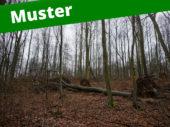 4. Musterinserat: Windwurf - Holzmarktplatz für Stockverkauf