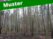 5. Musterinserat: Kiefer - Holzmarktplatz für Stockverkauf
