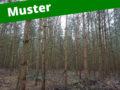 6. Musterinserat: Jungbestand - Holzmarktplatz für Stockverkauf